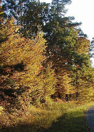 Přehled dřevin listnaté dřeviny